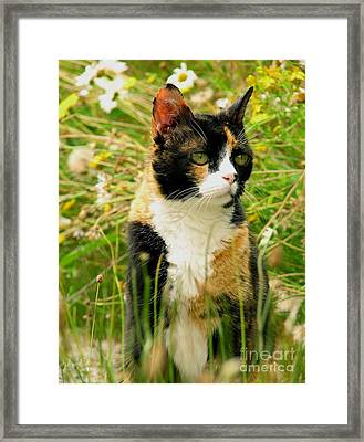 In Her Element Framed Print by Rory Sagner