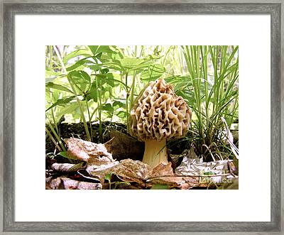 In Hiding - Morel Mushroom Framed Print