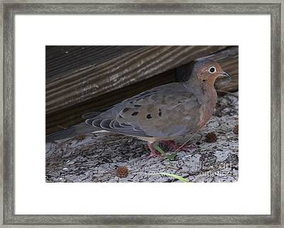 In Hiding Framed Print by Philip Bracco