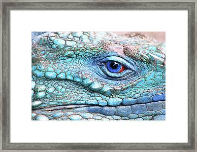 In His Eye Framed Print by Iryna Goodall