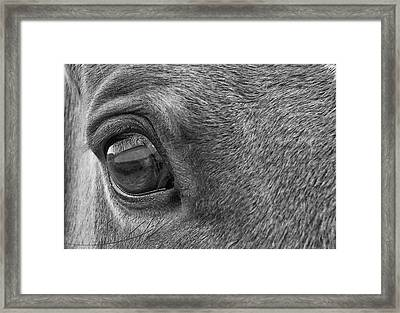 In Italian Cavallo View Framed Print by JAMART Photography