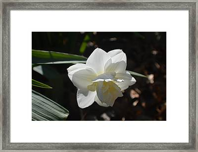 In Its Own Little Corner Framed Print by Tina M Wenger