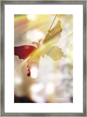 In Light Of Clipped Wings Framed Print by Jorgo Photography - Wall Art Gallery