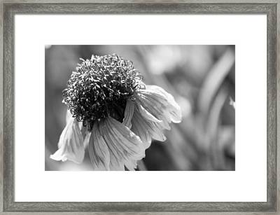 In Light Of Nature Framed Print by Terrie Taylor