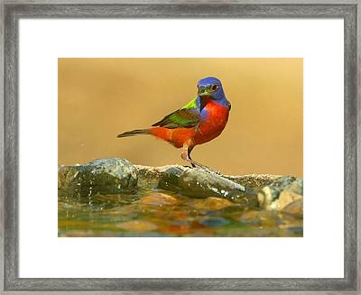 Framed Print featuring the photograph In Living Color by Myrna Bradshaw