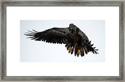 In Mid-air Framed Print by Mike Dawson