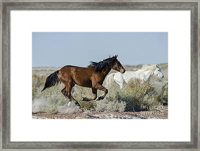 In Mid-flight  Framed Print by Nicole Markmann Nelson