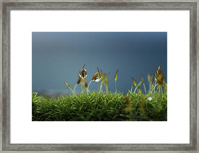 In Moss World .. Rain Framed Print