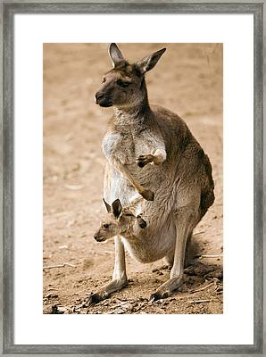 In  Mother's Care Framed Print by Mike  Dawson