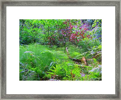 Framed Print featuring the photograph In Muir Woods A Fallen Tree Surrenders To The Forest Ferns by Don Struke