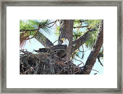 In My Nest Framed Print by Deborah Benoit