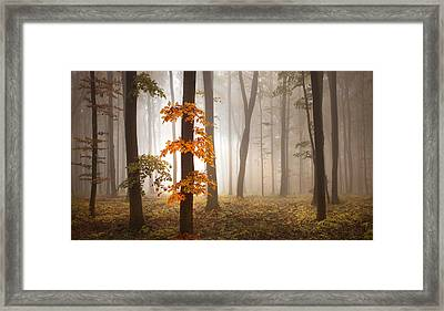In November Light Framed Print by Franz Schumacher