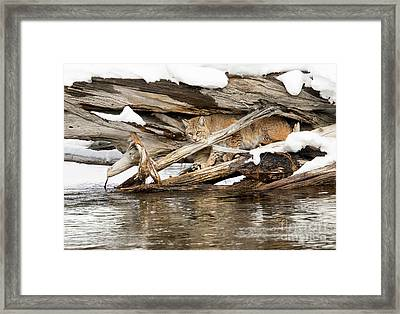 In Sight Framed Print by Aaron Whittemore