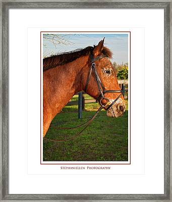 In Profile Framed Print