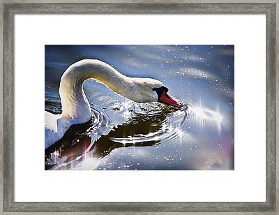 Framed Print featuring the photograph In Rays by Gouzel -