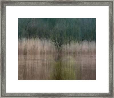 In Reeds Framed Print