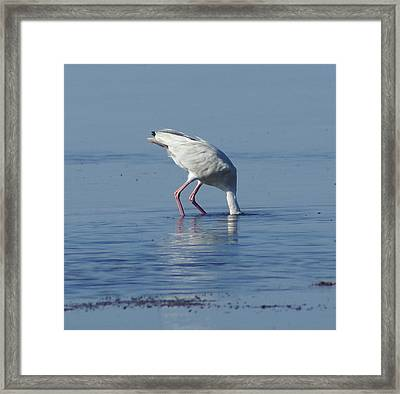In Search Of Framed Print by Debbie May