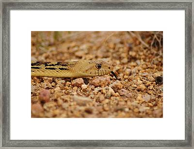 In Search Of... Framed Print by Michael Knight