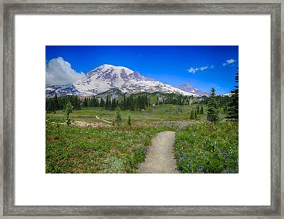 In Search Of Wildflowers Framed Print by Lynn Hopwood