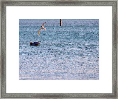 In Sublime Harmony Framed Print