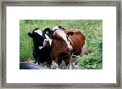 In Sync Framed Print by Lois Lepisto