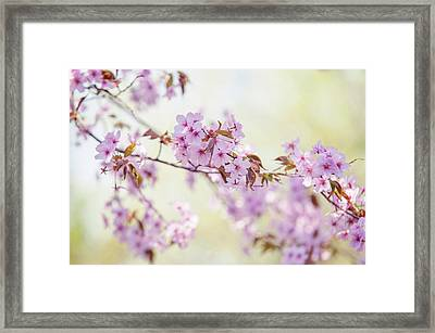 Framed Print featuring the photograph In Tender Bloom. Spring Watercolors by Jenny Rainbow
