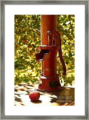 In The Apple Orchard Framed Print by Jennifer Apffel
