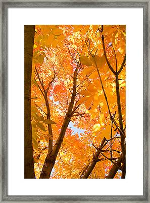 In The Autumn Mood  Framed Print