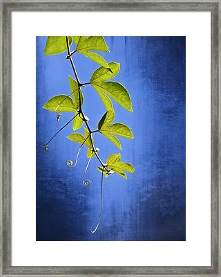 In The Blue Framed Print by Carolyn Marshall