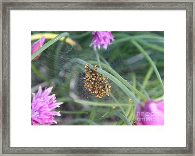 Framed Print featuring the photograph In The Chives by Erica Hanel