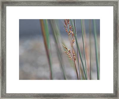 In The Company Of Blue - Framed Print