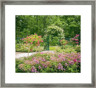 In The Company Of Roses Framed Print by Jessica Jenney