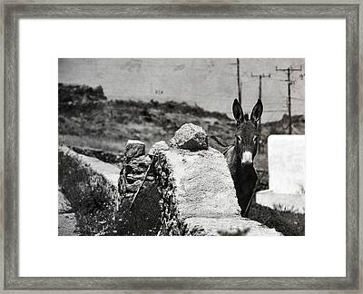 In The Countryside Of Mykonos Framed Print