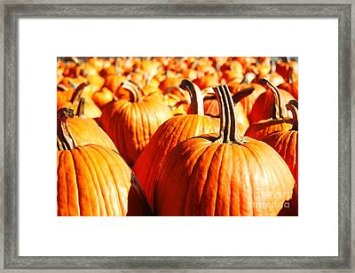 Framed Print featuring the photograph In The Days Still Left  by Dana DiPasquale