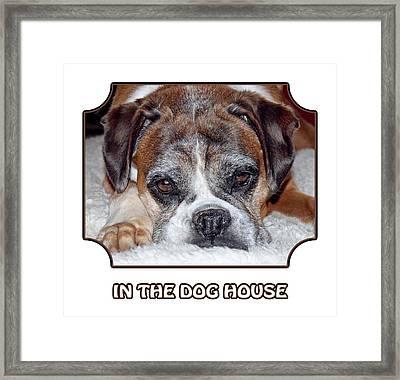 In The Dog House - White Framed Print by Gill Billington