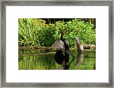In The Dryer Framed Print