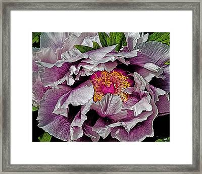 In The Eye Of The Peony Framed Print by Chris Lord
