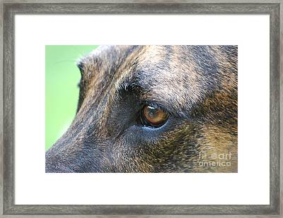 In The Eyes Of A Dog Framed Print by Lila Fisher-Wenzel