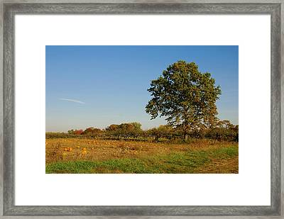 In The Field - Battlefield Orchards Framed Print