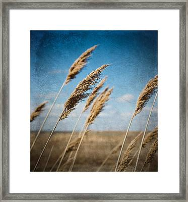 In The Field Framed Print by Michel Filion