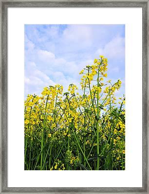 In The Field Framed Print by Svetlana Sewell