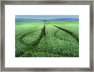 In The Fields Of Green Framed Print