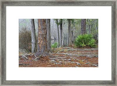 In The Florida Pines Framed Print by Tyler Findley