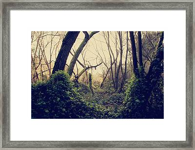 In The Forest Of Dreams Framed Print by Laurie Search