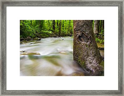 In The Forest Framed Print by Shelby Young