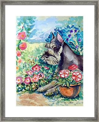 In The Garden - Schnauzer Framed Print by Lyn Cook