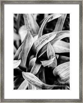 In The Garden _ Tulip Leaves Framed Print