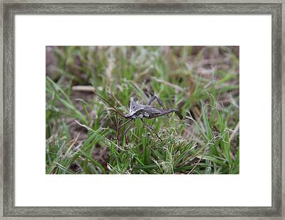 In The Grass Framed Print by Lee Anderson