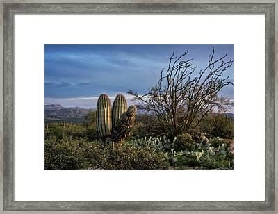 Framed Print featuring the photograph In The Green Desert  by Saija Lehtonen