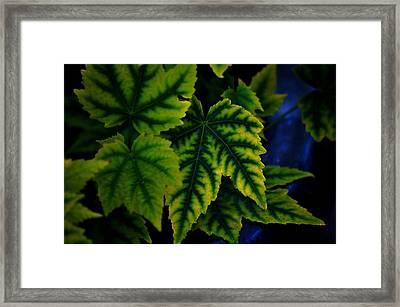 In The Green Framed Print